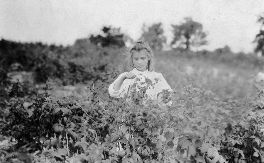 A young girl picking berries in a field
