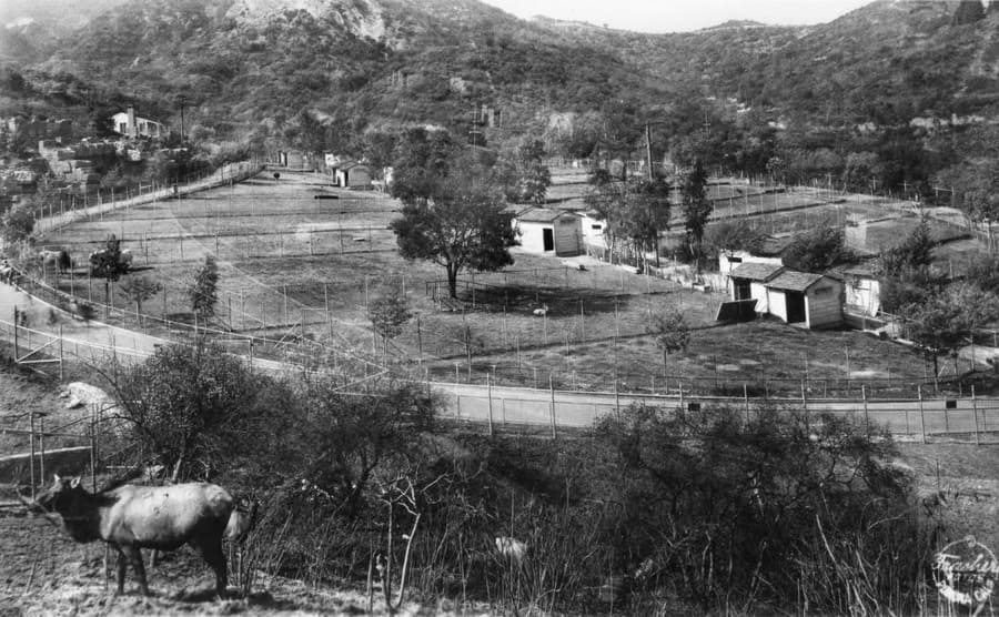 An aerial view of the Griffith Park zoo