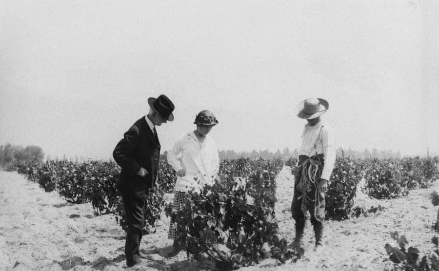 A view of two men and a woman checking out a grapevine at Cucamonga vineyard