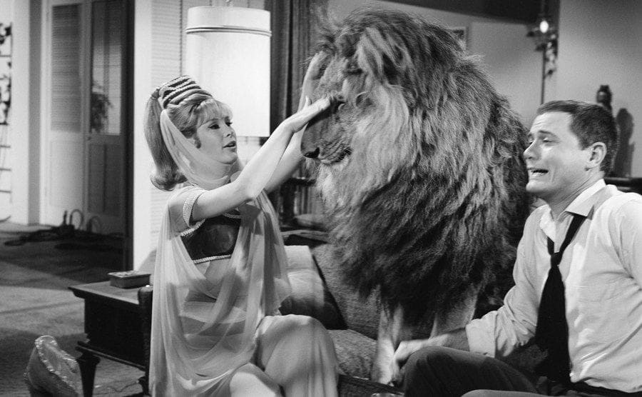 Barbara Eden is petting a lion in an episode from 'I Dream of Jeannie.'