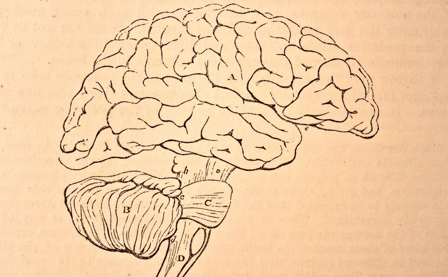 A vintage brain illustration.