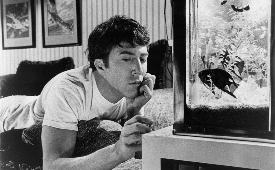 Dustin Hoffman stares at his fish tank in a scene from the film.